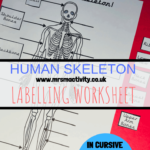 human body labelling worksheet