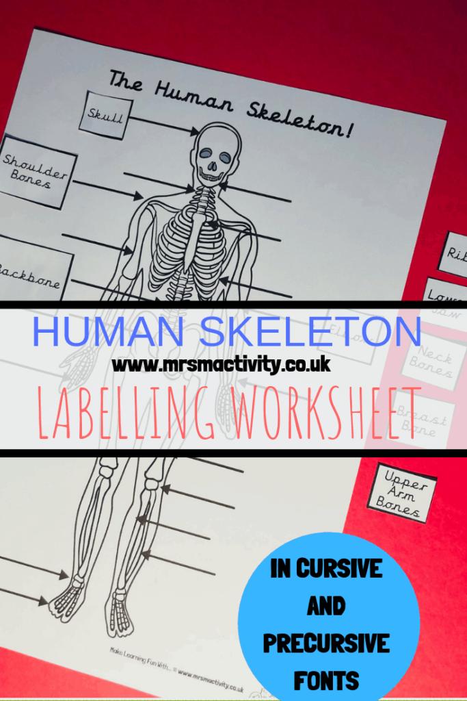human body labelling worksheet