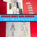 human body senses labelling activity
