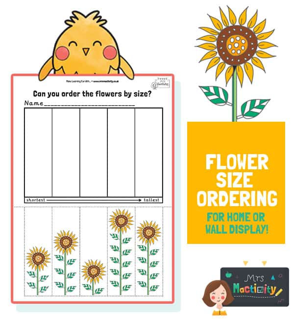 Spring Size Ordering Activity - Colour Version