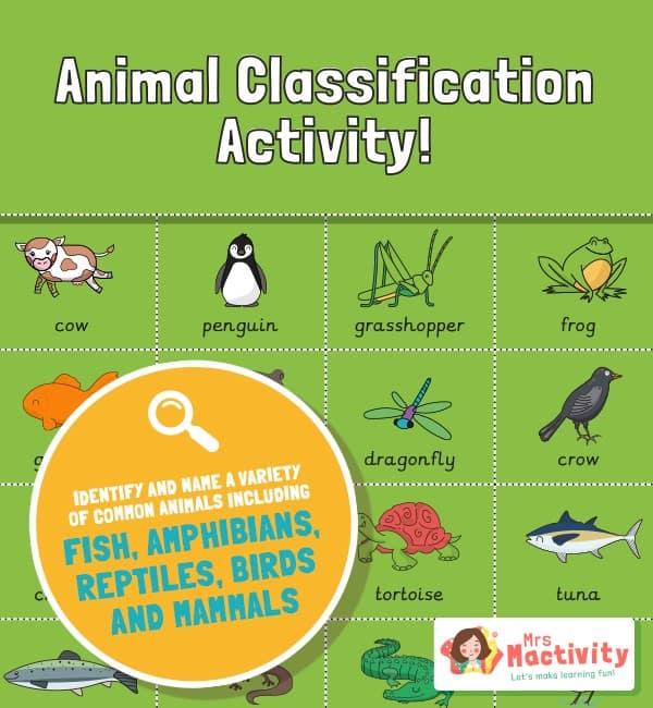 Year 1 animal classification sorting activity