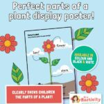Parts of a Plant Display Poster
