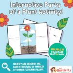 Parts of a plant labelling interactive activity