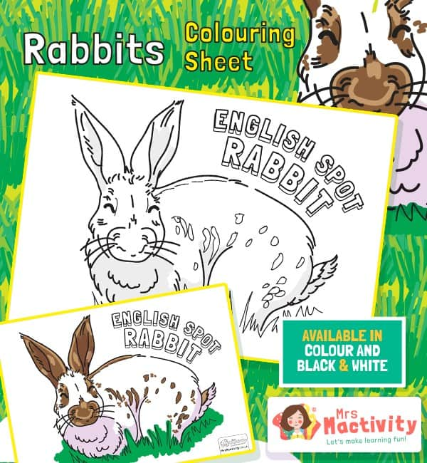 English Spot Rabbit Colouring Posters