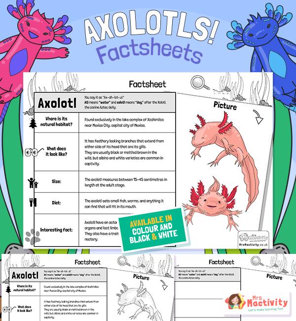 Axolotl Factsheet for Kids